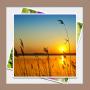 icon Gallery & Image Editor