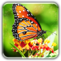 icon Butterfly wallpapers LWP