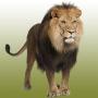 icon Lion sounds