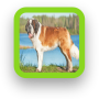 icon Saint Bernard Dog Wallpaper