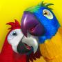 icon Talking Parrot Couple Free