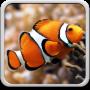 icon Aquarium Live Wallpaper