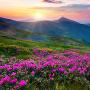 icon Mountain Flower Live Wallpaper
