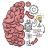 icon Brain Test 2.718