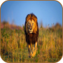 icon Lion HD Wallpaper