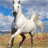 icon Horse Jigsaw Puzzles 2.9.27