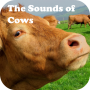 icon The Sounds of Cows