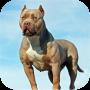 icon Pitbull Dog Simulator