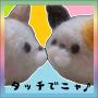icon タッチでニャ♪~シャー!のぎゃくしゅう~猫ネコねこアクション