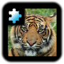 icon Jigsaw Puzzle: Tiger