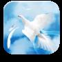 icon Angel Wings HD Live Wallpaper