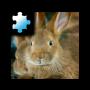 icon Jigsaw Puzzle: Rabbit