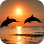 icon Amazing Dolphins HD