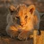 icon Animal Babies Jigsaw Puzzles