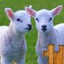 icon Animals Jigsaw Puzzles Kids