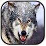 icon Wolf Sounds