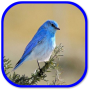 icon Birds Sounds