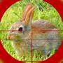 icon Rabbit Hunting