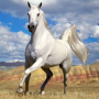 icon Horse Jigsaw Puzzles