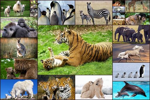 Animal Babies Jigsaw Puzzles