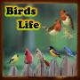 icon Birds Life