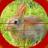icon Rabbit Hunting 1.3